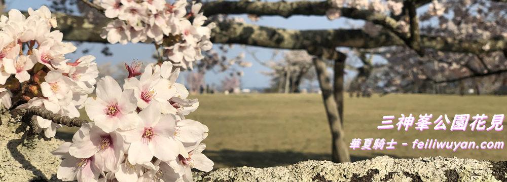 三神峯公園花見/染井吉野 (ソメイヨシノ)