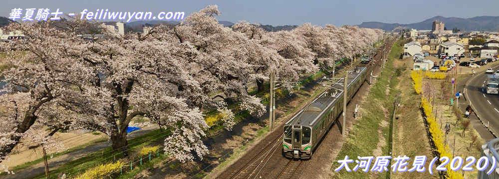 大河原花見/白石川堤一目千本桜